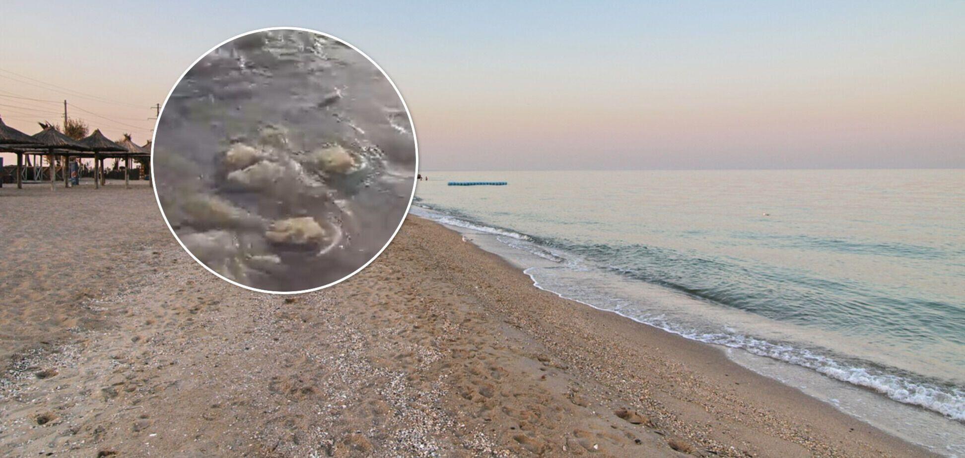 Пляжі Бердянська після потужного шторму засипало медузами. Відео