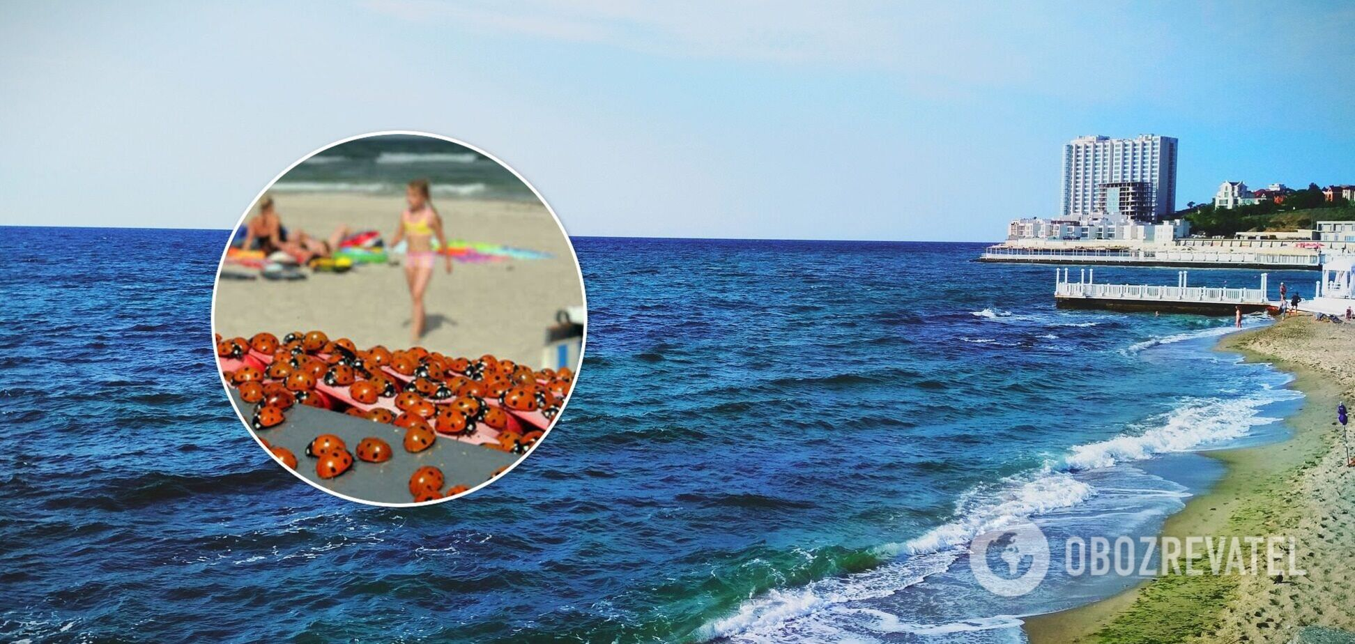 Сонечки 'атакували' морське узбережжя