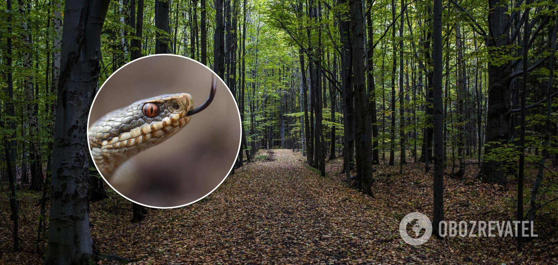 Змії активізувалися: лікар озвучив важливі поради