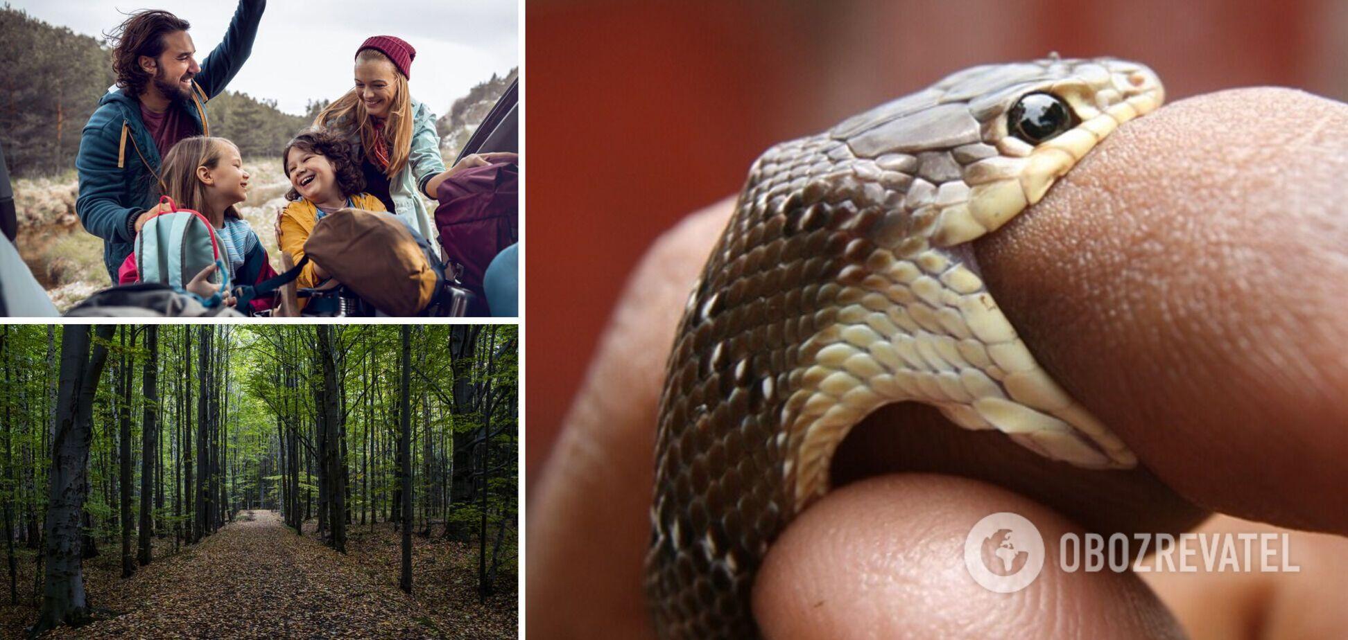 В Украине активизировались змеи: как избежать нападения и что делать в случае укуса