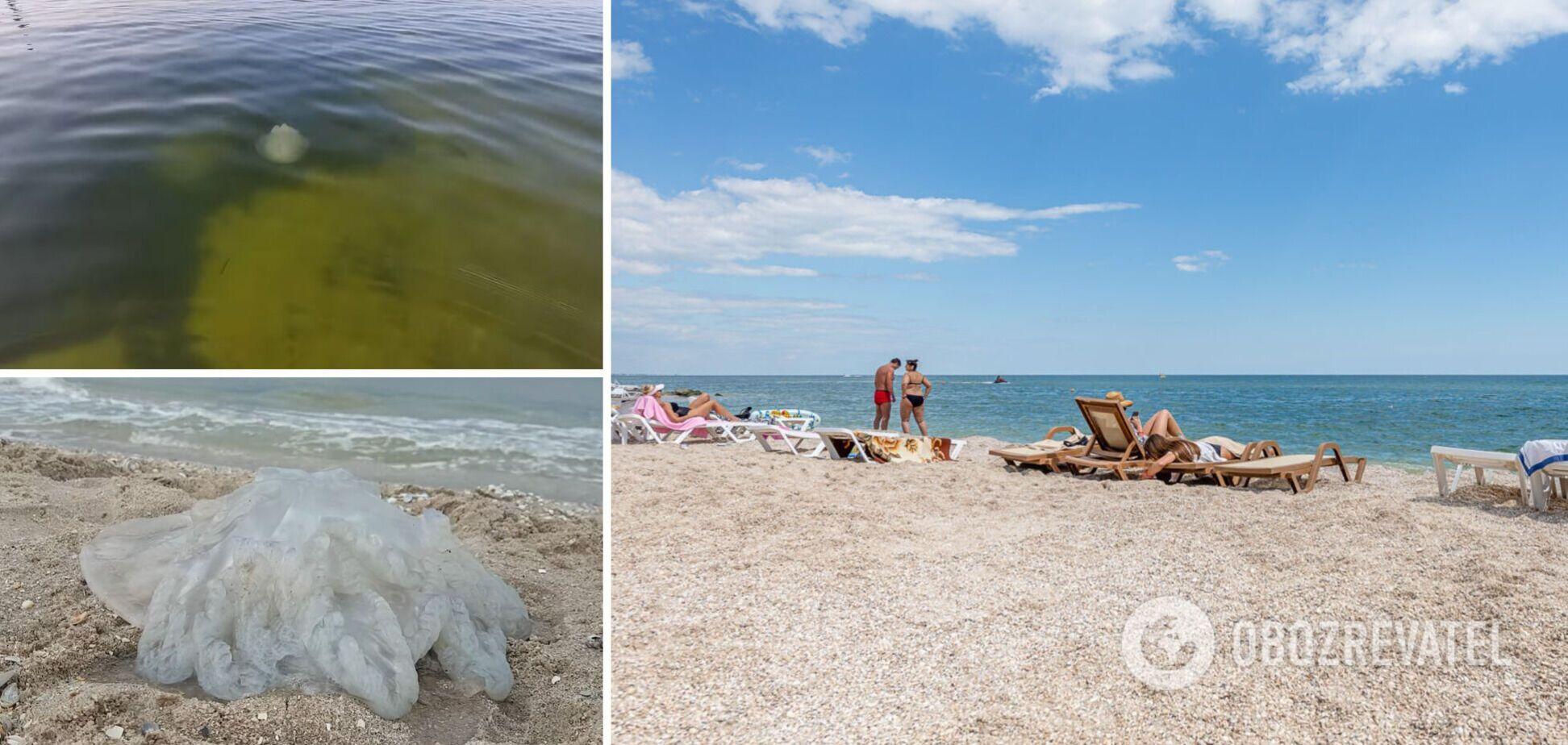 Вода кольору болота і величезні медузи: туристи показали свіжі відео з Бердянська