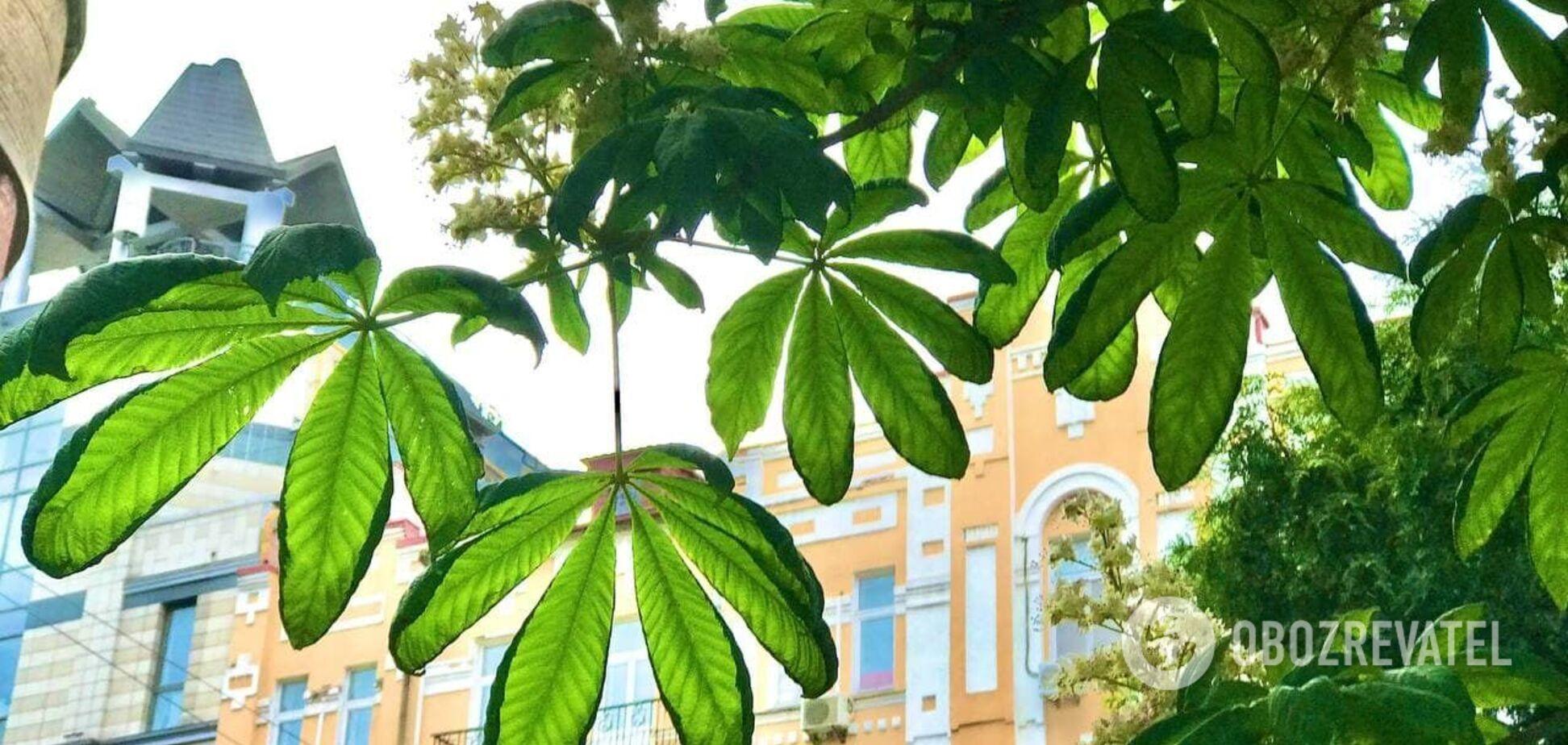 У Києві з'являться 32 зелені зони: перелік адрес