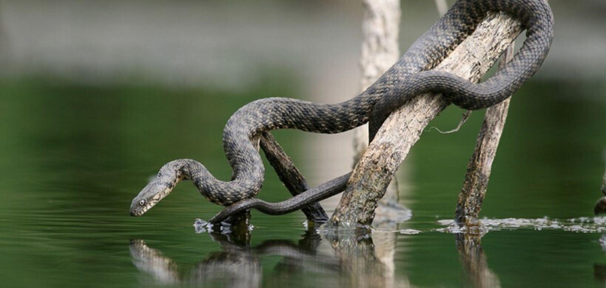 На Львівщині дитину вкусила змія