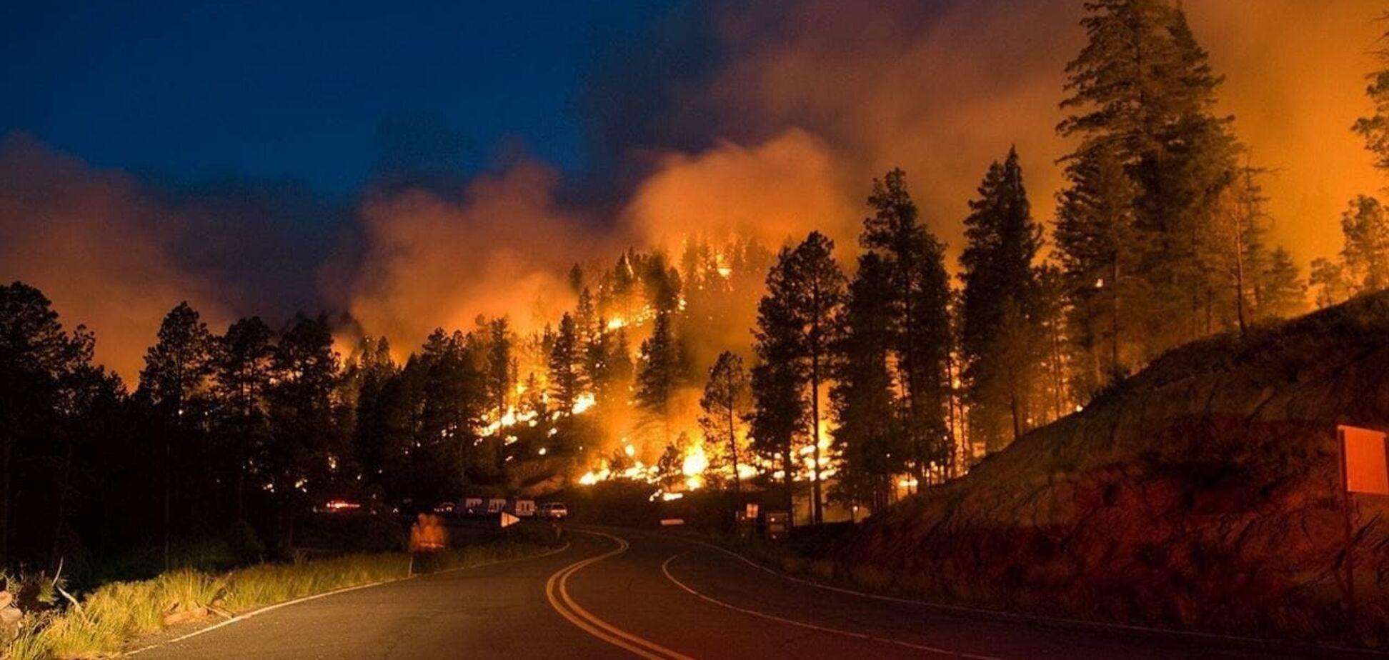 У Росії горять ліси