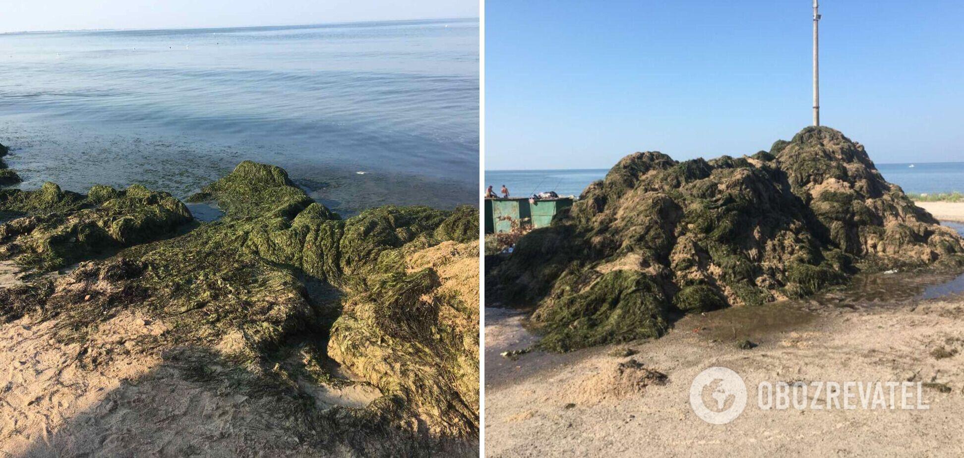 В курортном Бердянске пляжи 'утопают' в водорослях, к их расчистке привлекли бульдозеры. Фото и видео