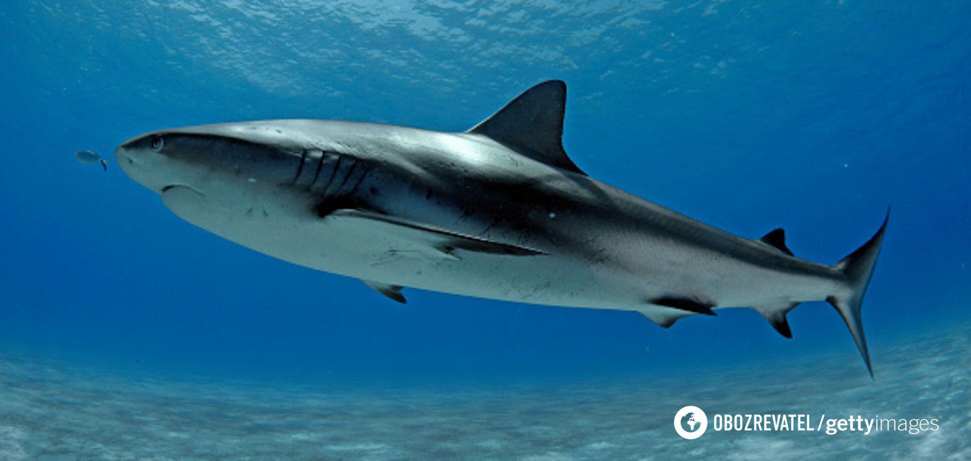 Акула спробувала вкусити 15-річного серфінгіста. Відео