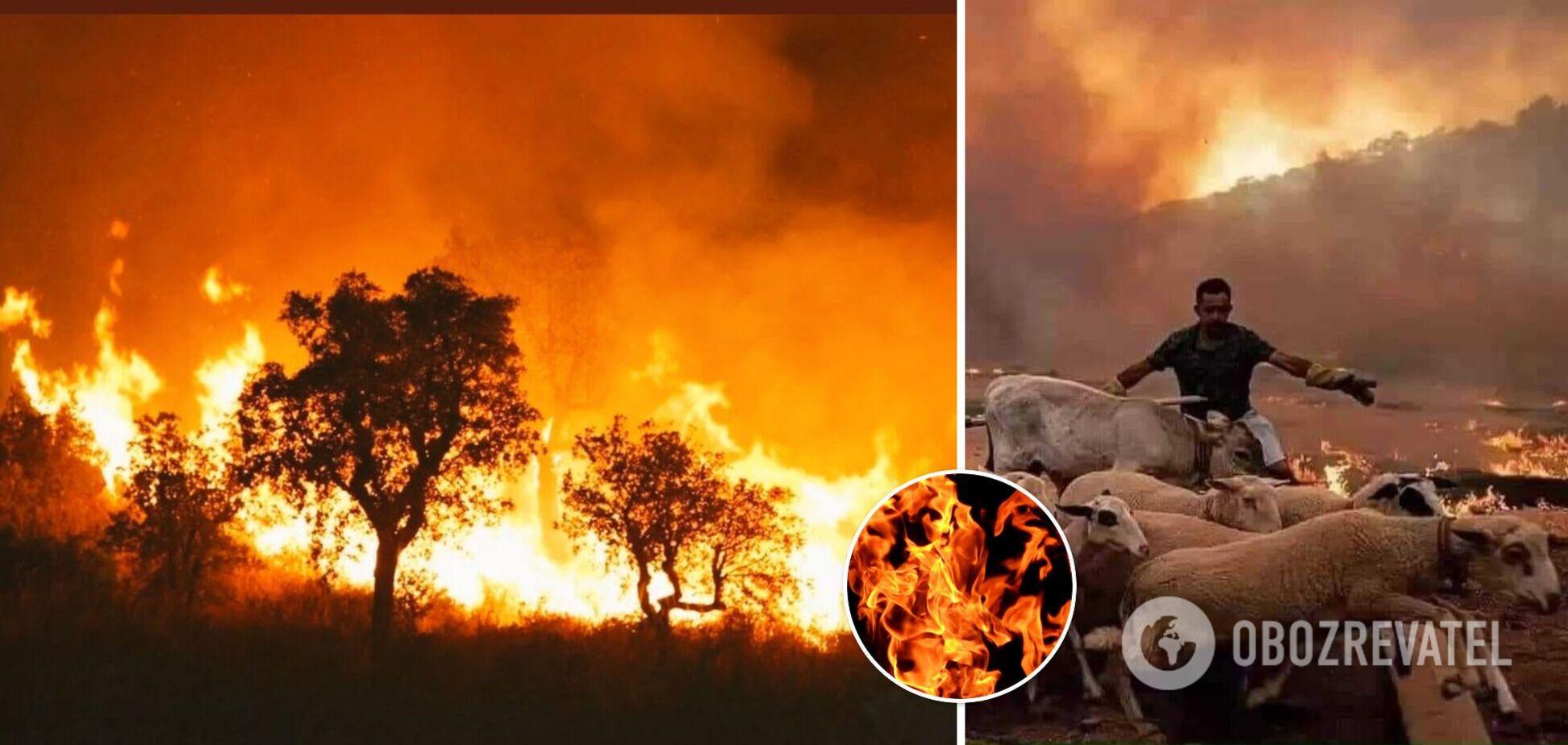 Пожежі в Алжирі