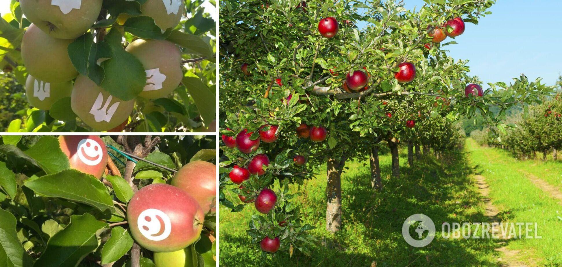 Яблоки с трезубцем