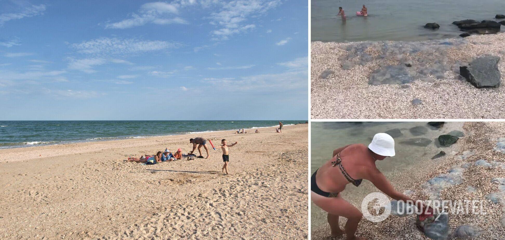 'Медузы лежат на пляже с людьми, загорают': турист показал, что происходит в курортной Кирилловке