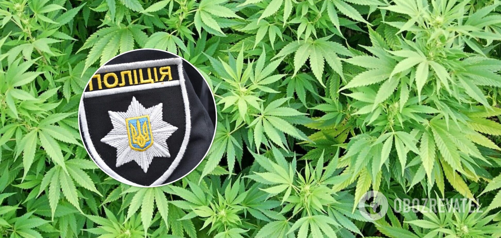 Под Одессой полицейские изъяли наркотиков на 7,5 млн гривен: зелье выращивали на огородах. Фото, видео