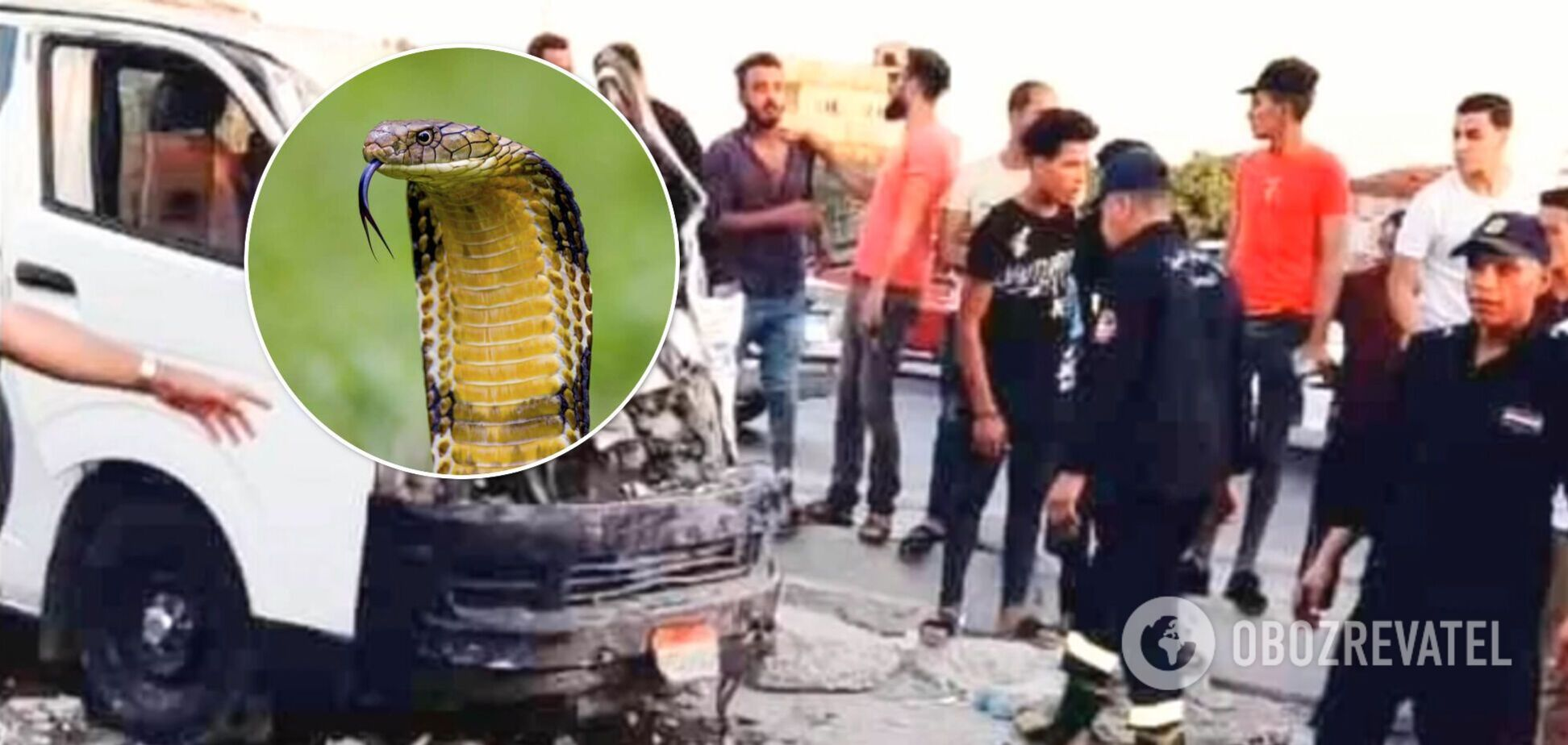 У Єгипті кобра в мікроавтобусі стала причиною смерті п'яти осіб. Фото