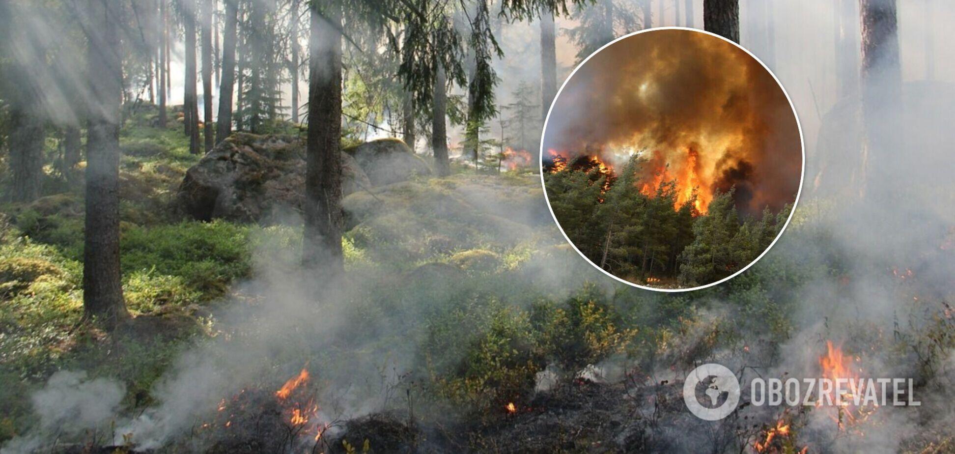Під Києвом спалахнула пожежа в лісі. Ексклюзивні подробиці й відео