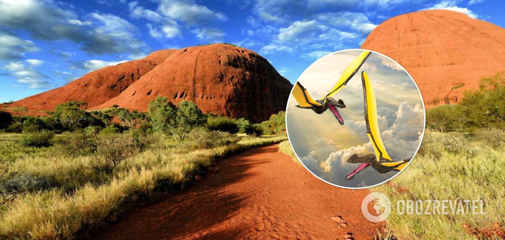В Австралии обнаружили останки 'дракона', размах крыльев которого достигал 7 метров. Фото