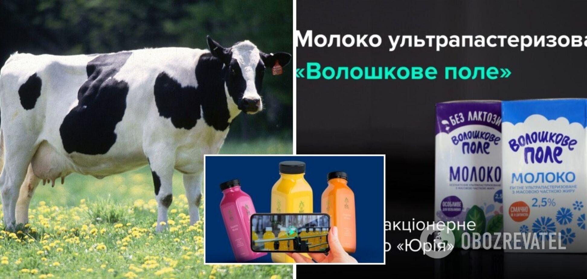 ТМ 'Волошкове поле' показала процес створення молока