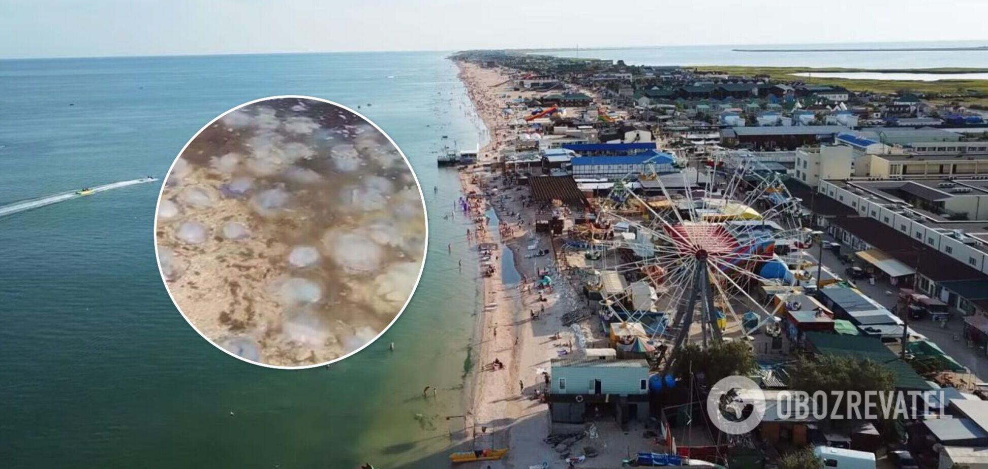 В Кирилловке продолжается нашествие медуз