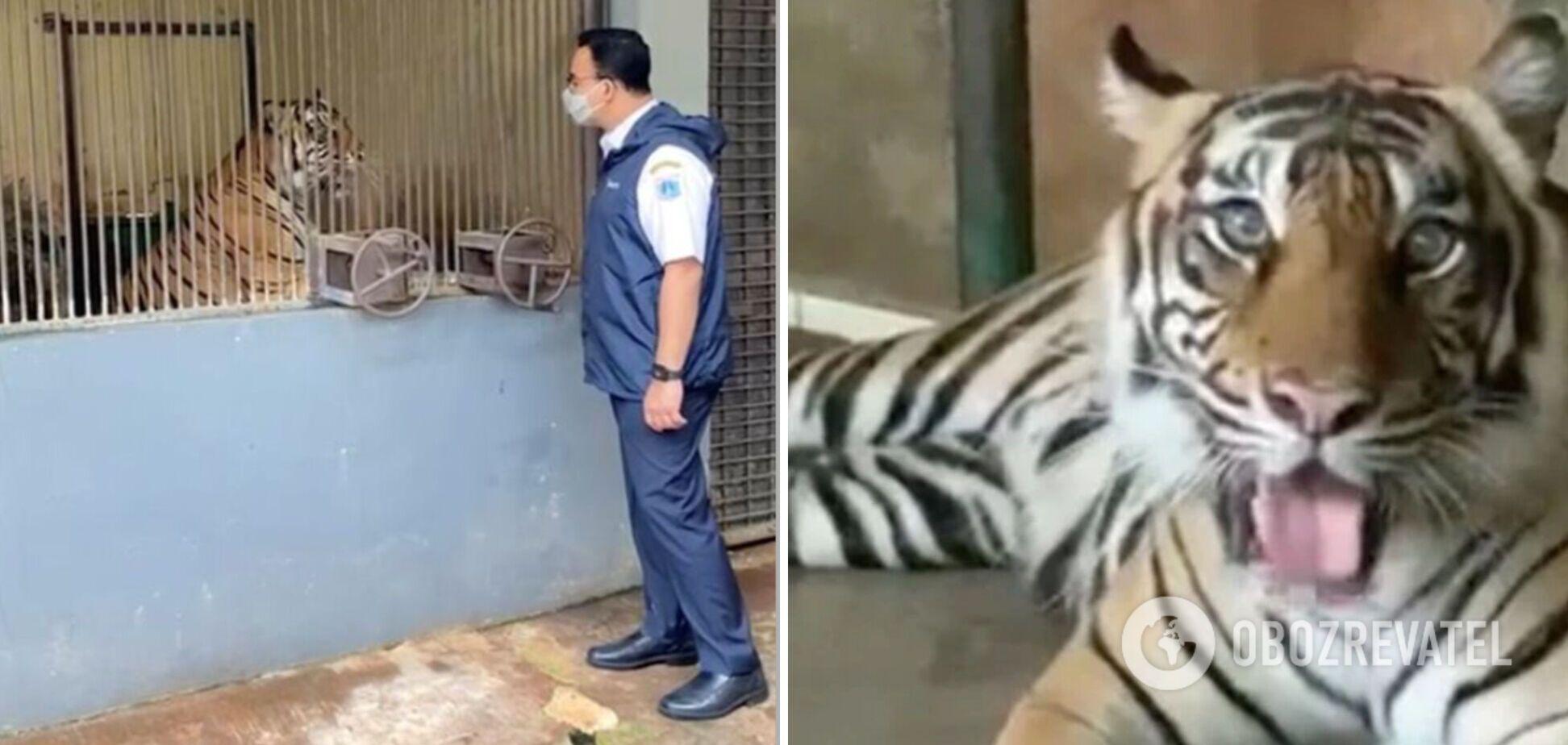 В Индонезии вылечили двух тигров от коронавируса