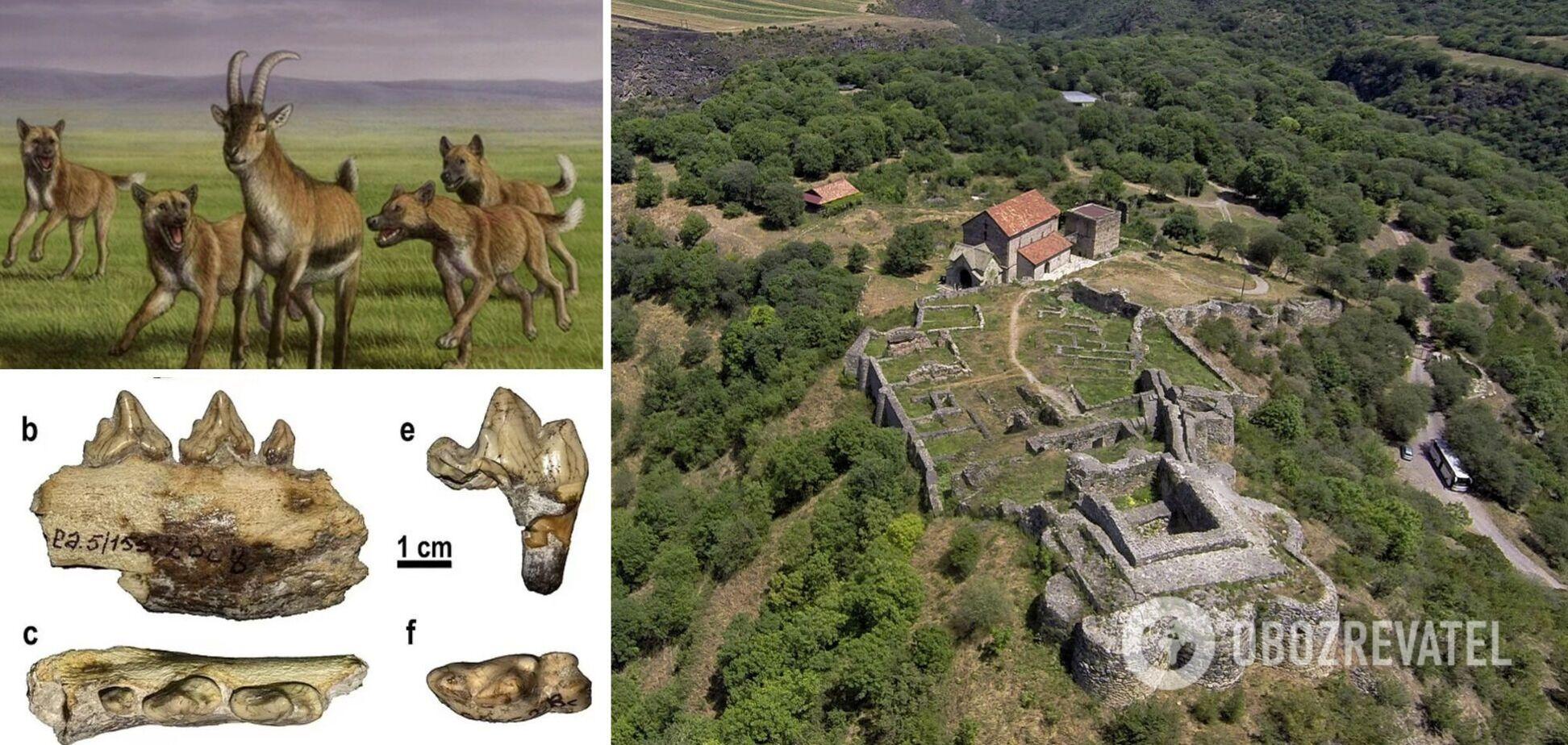 Археологи виявили в Грузії останки собаки, що жив 1,8 млн років тому. Фото