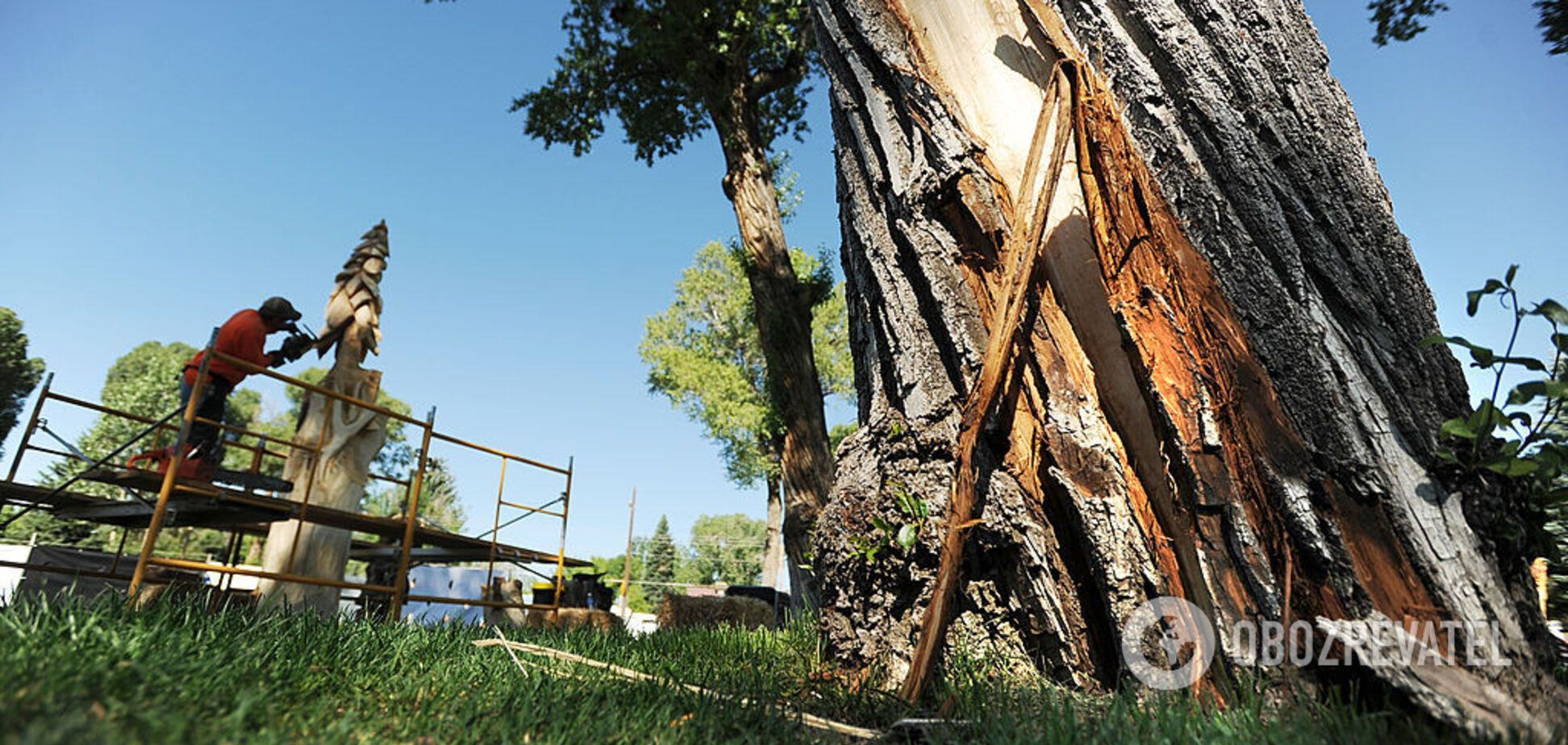 Дерево могло рухнуть от удара молнии: новые подробности о гибели парня и девушки во Львове