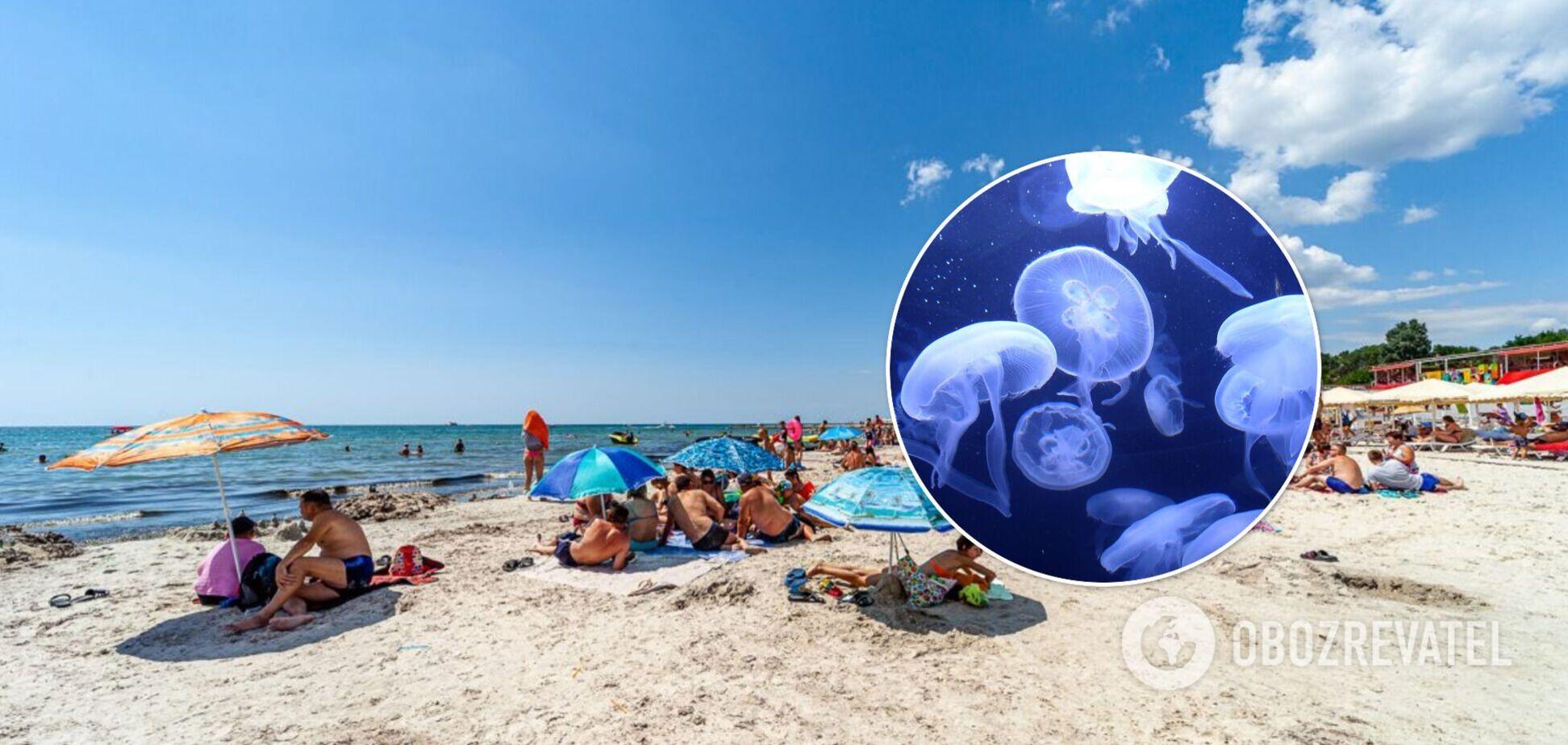 Украинские курорты атаковали медузы: ученый назвал причины нашествия