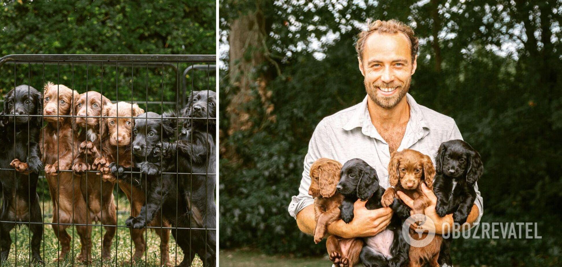 Брат Кейт Миддлтон в розовых шортах умилил сеть снимками со своими собаками
