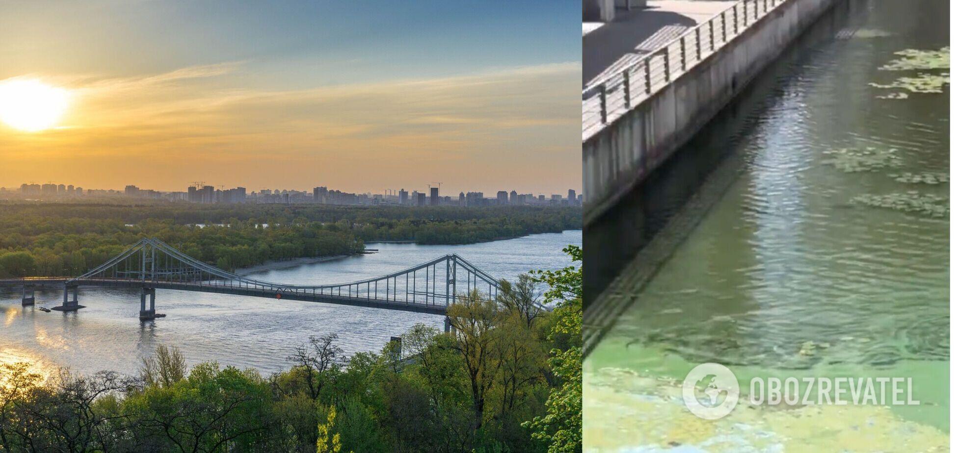 У Києві вода у Дніпрі позеленіла і почала погано пахнути