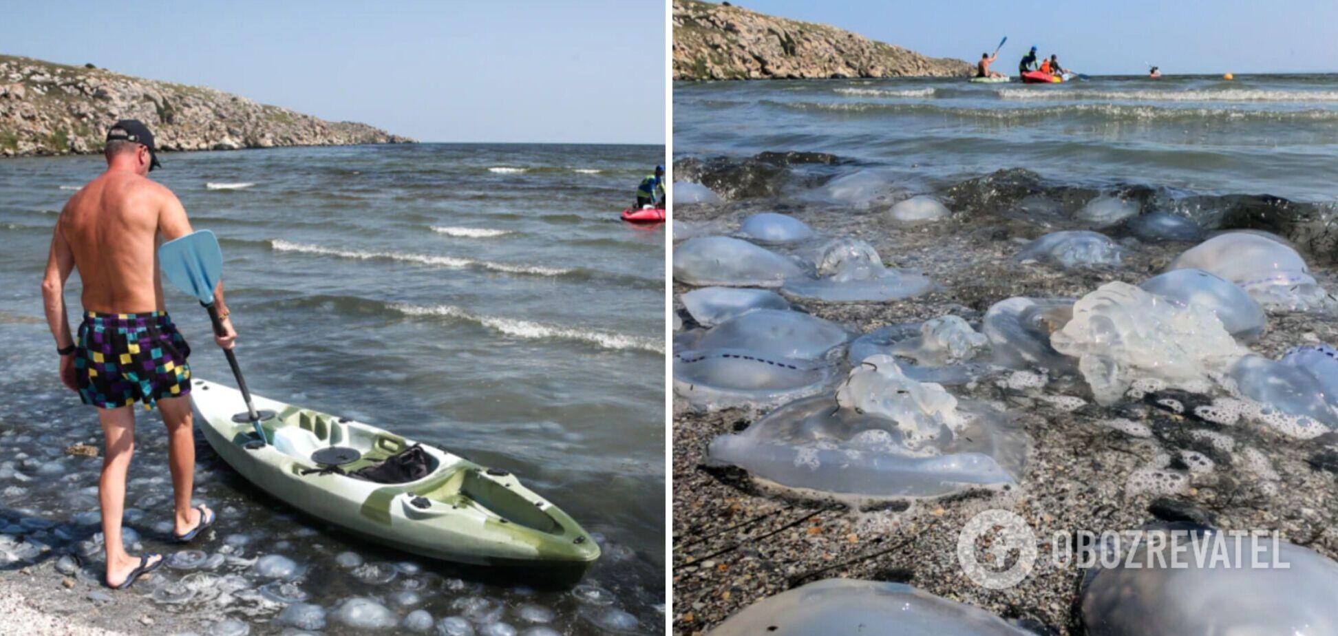 Побережье Крыма 'атаковали' тысячи огромных медуз, которые жалят туристов. Фото