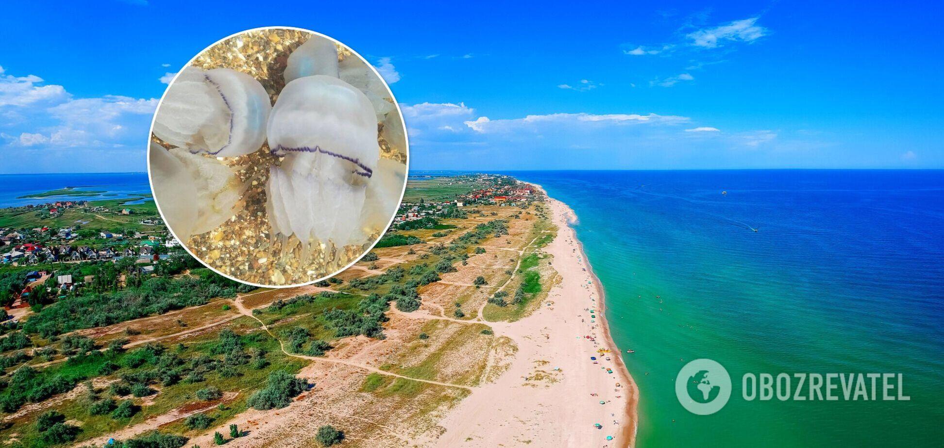 Городские власти Бердянска не будут убирать медуз с берега – это естественный процесс. Эксклюзивные подробности