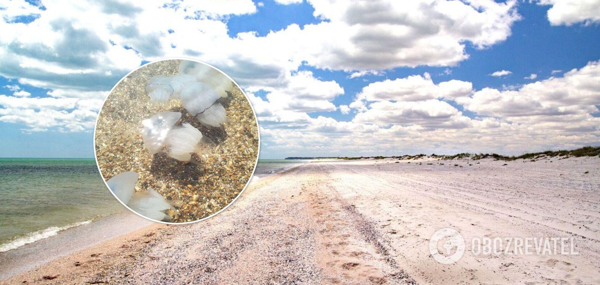 Невозможно зайти в море: туристы жалуются на нашествие медуз в Бердянске. Фото и видео