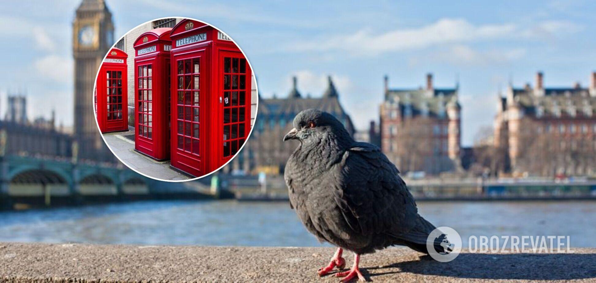 Голуби в Великобритании могут прилететь гости без приглашения