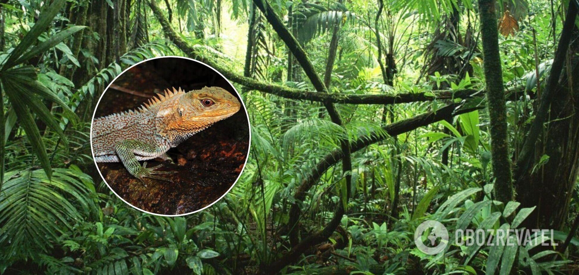 Ученые обнаружили в Перу новый вид 'драконов'. Фото
