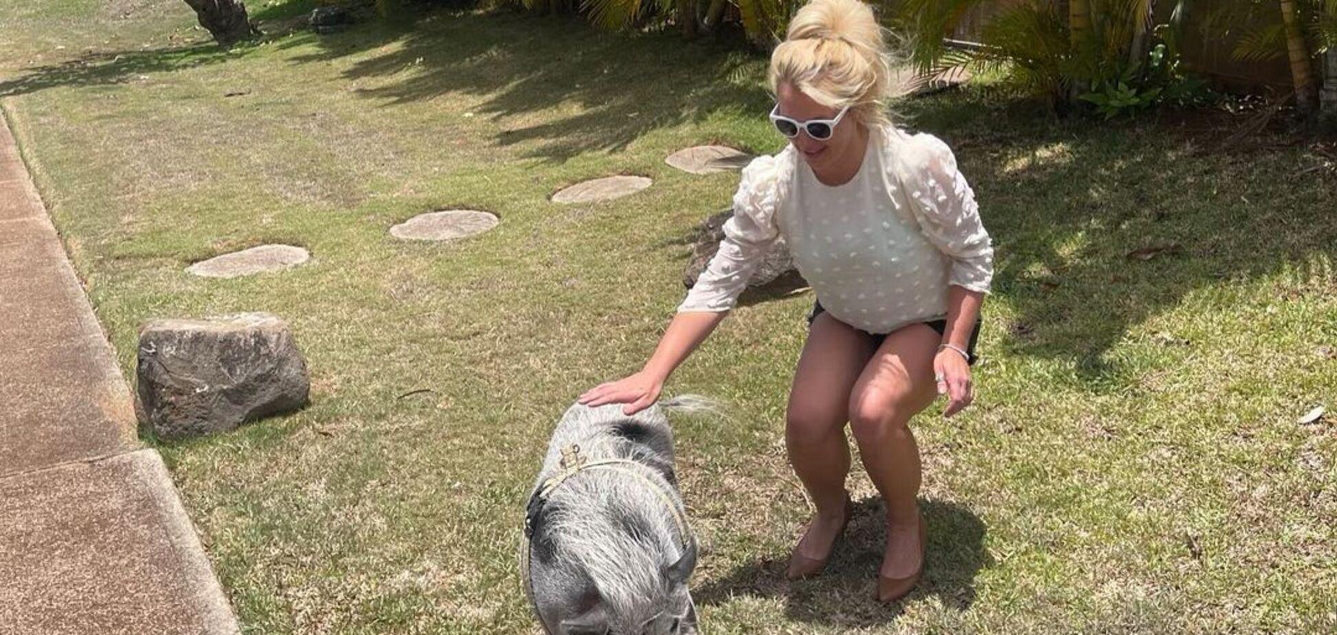 Бритни Спирс с кабаном