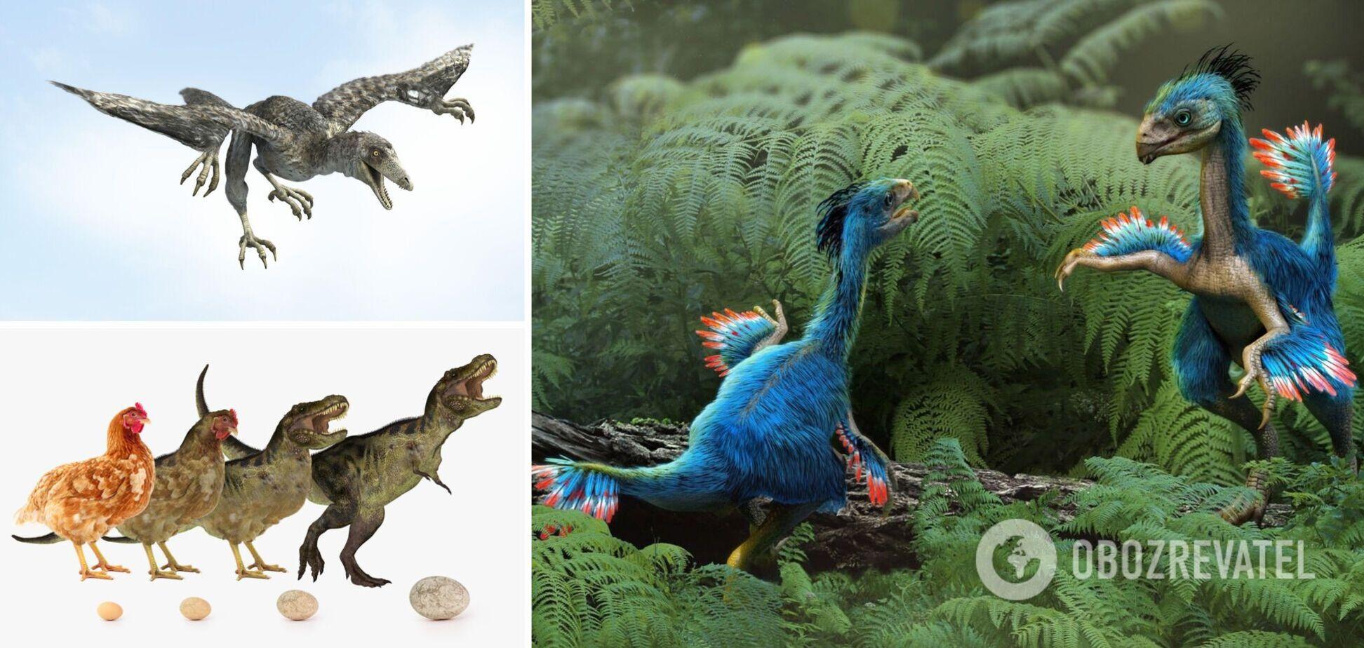 Ученые выяснили, почему птицы уцелели во время массового вымирания динозавров
