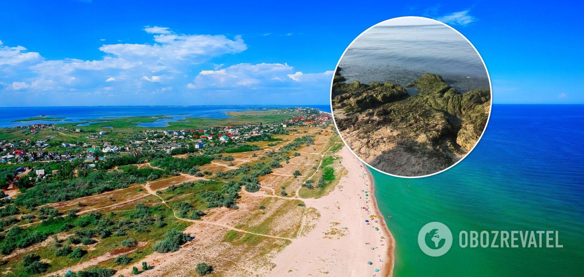На Азовском море полно водорослей