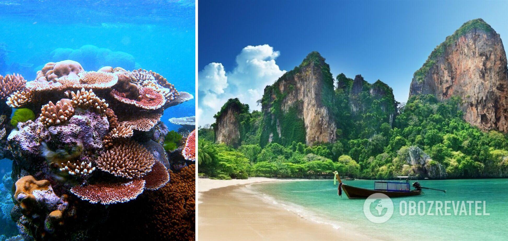 У Таїланді заборонили використовувати сонцезахисні креми: в чому причина