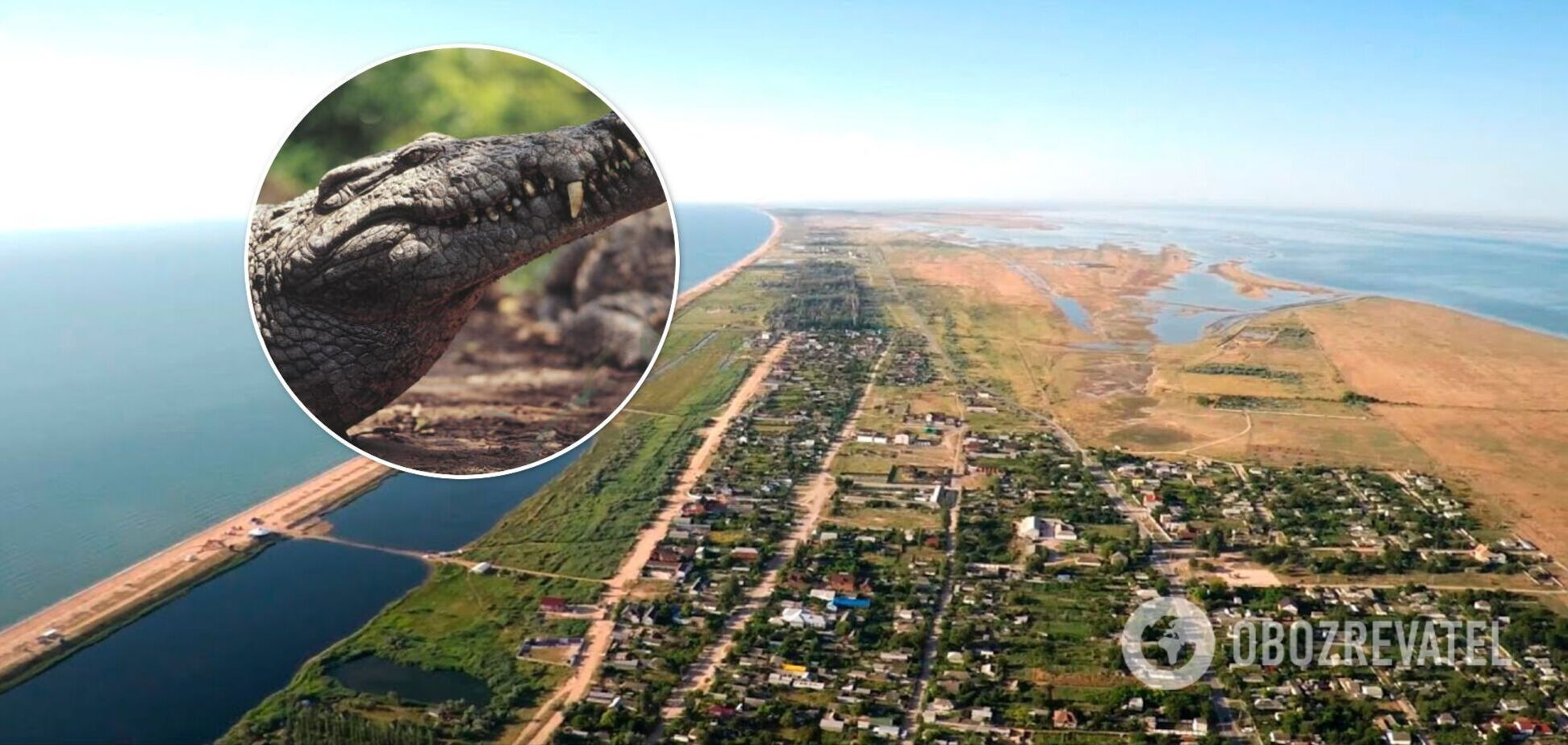 На Арабатской стрелке обнаружили полутораметрового крокодила