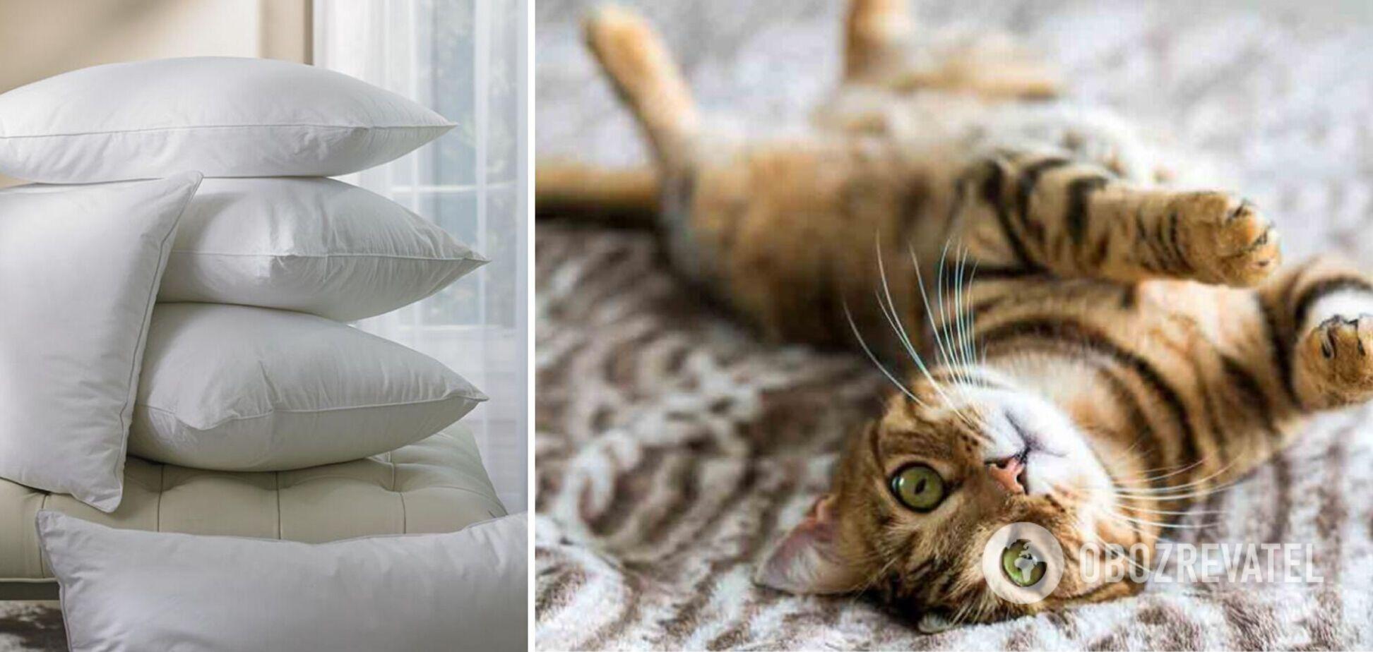 Хозяйка придумала смешной способ, как справиться с навязчивым котом. Видео