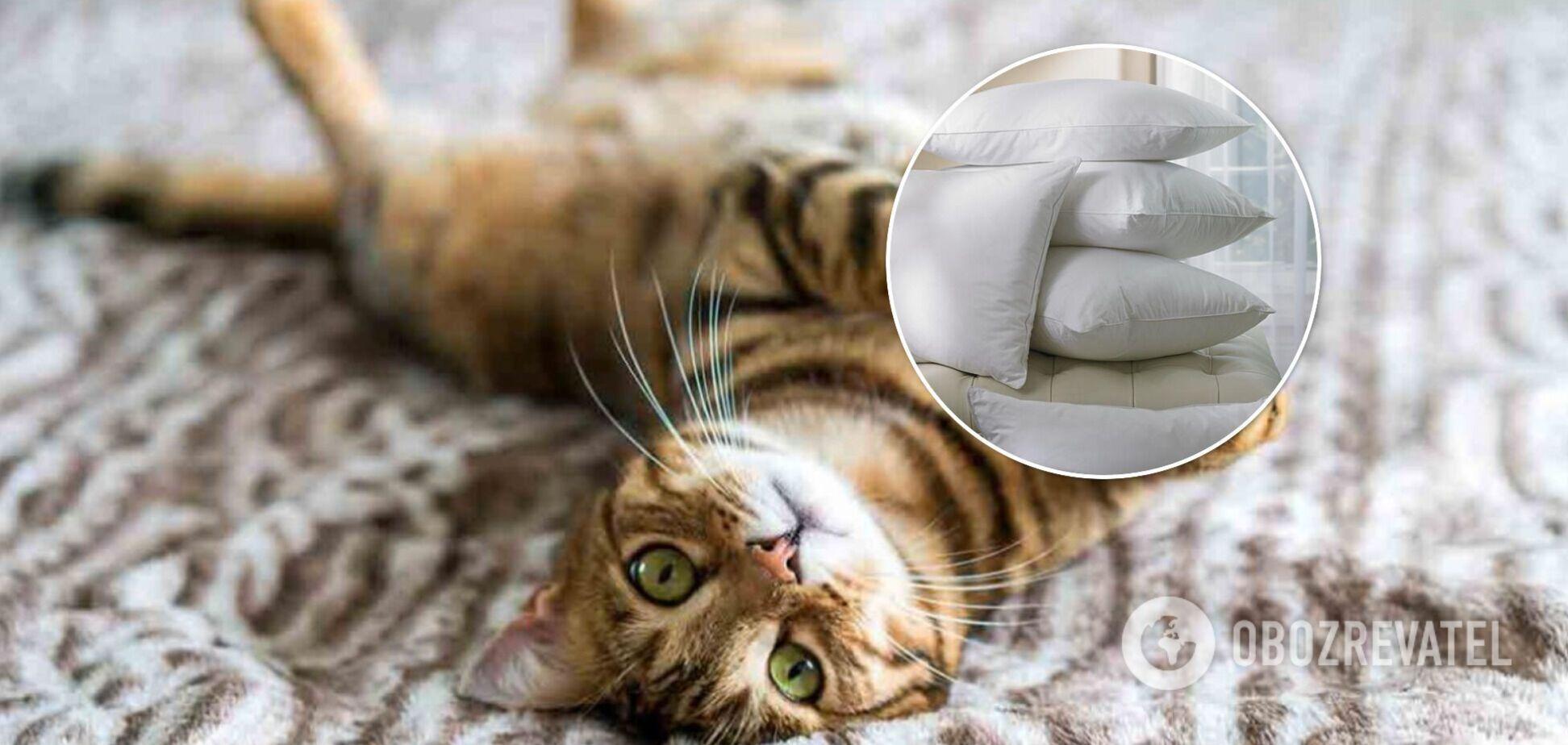 Забавный способ, как справиться с навязчивым котом