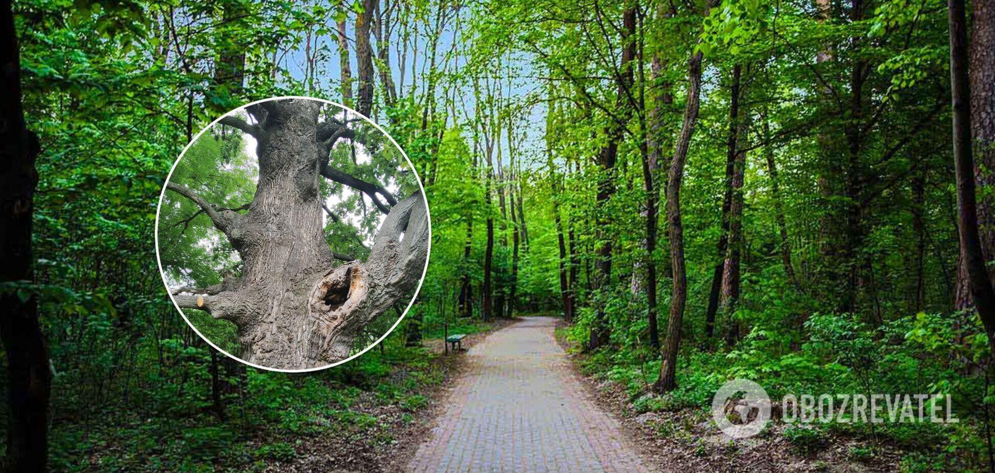 Поруч виявили кілька 300-річних дерев