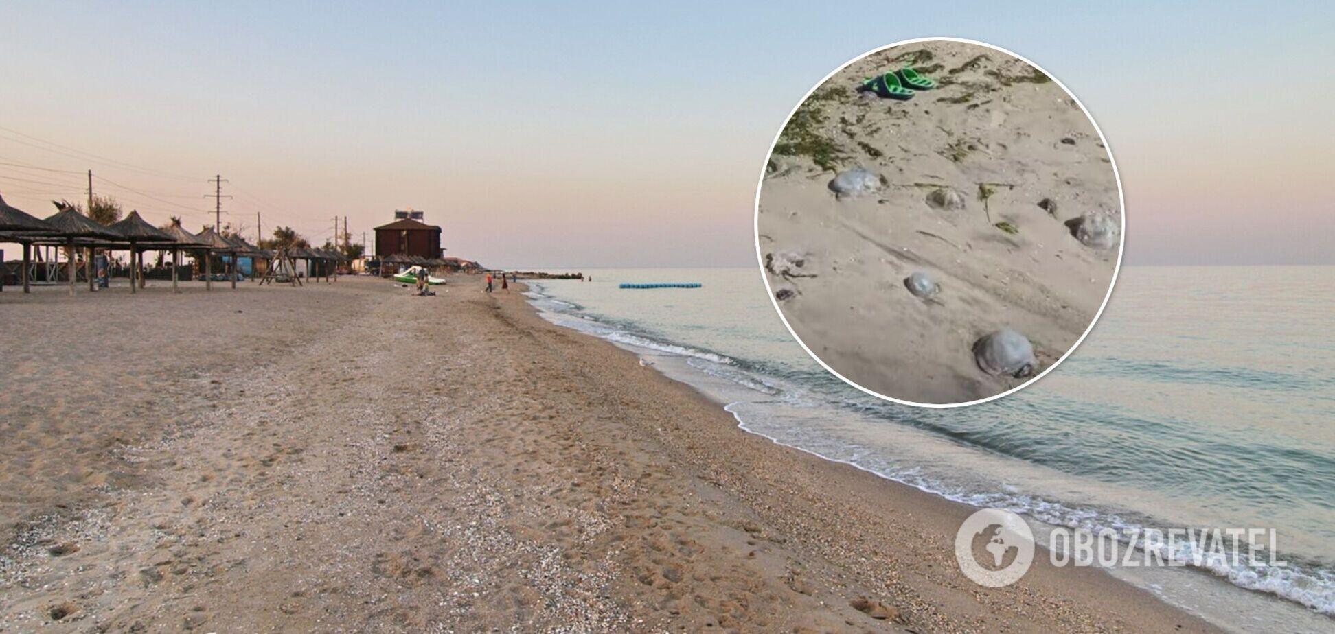 Мертвые медузы на пляже, комары заедают: туристка пожаловалась на отдых в Бердянске