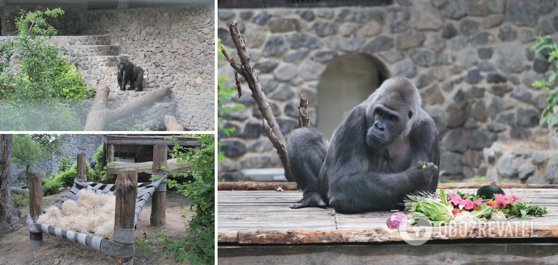 Кличко показал новый летний вольер для гориллы Тони в Киевском зоопарке. Видео