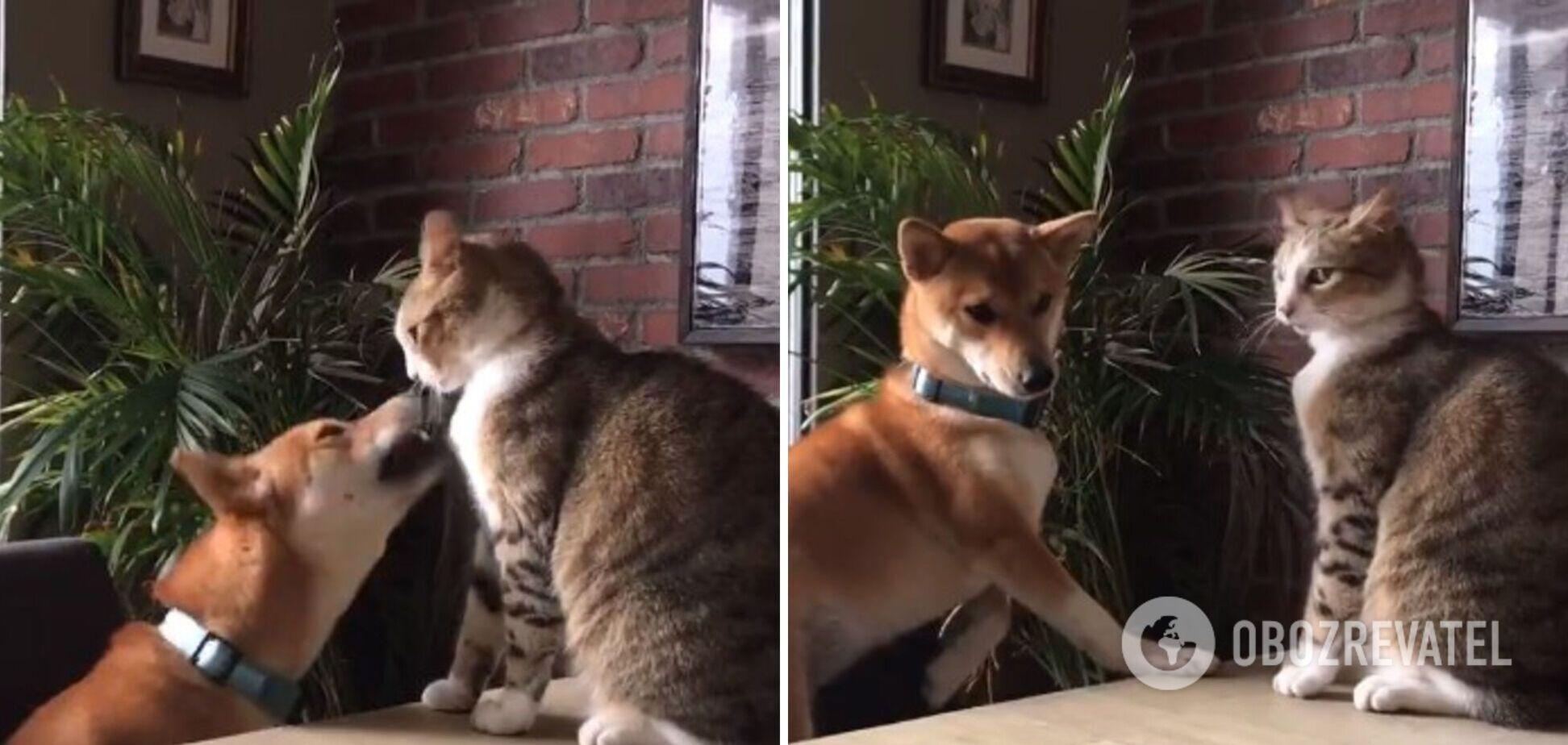 Кошка оказалась сильнее собаки