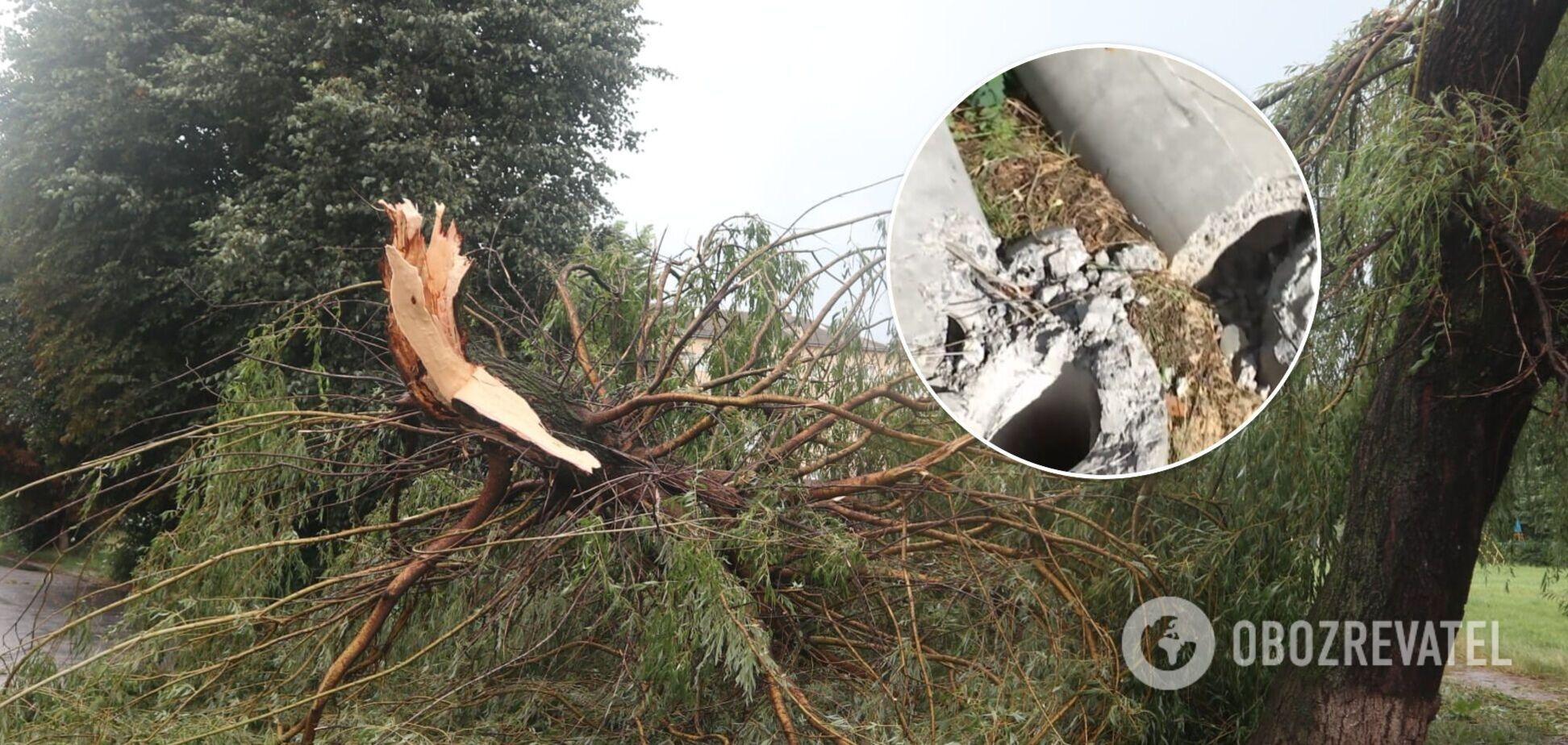Виривав дерева з корінням: Київщиною пронісся потужний буревій. Відео