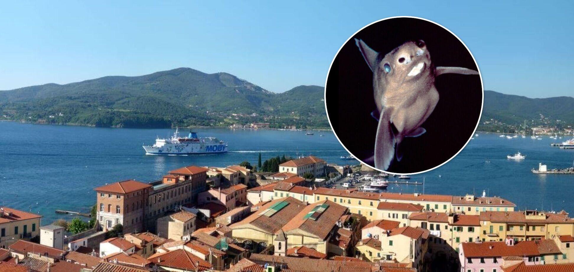 В Италии поймали акулу, поразительно похожую на свинью. Фото