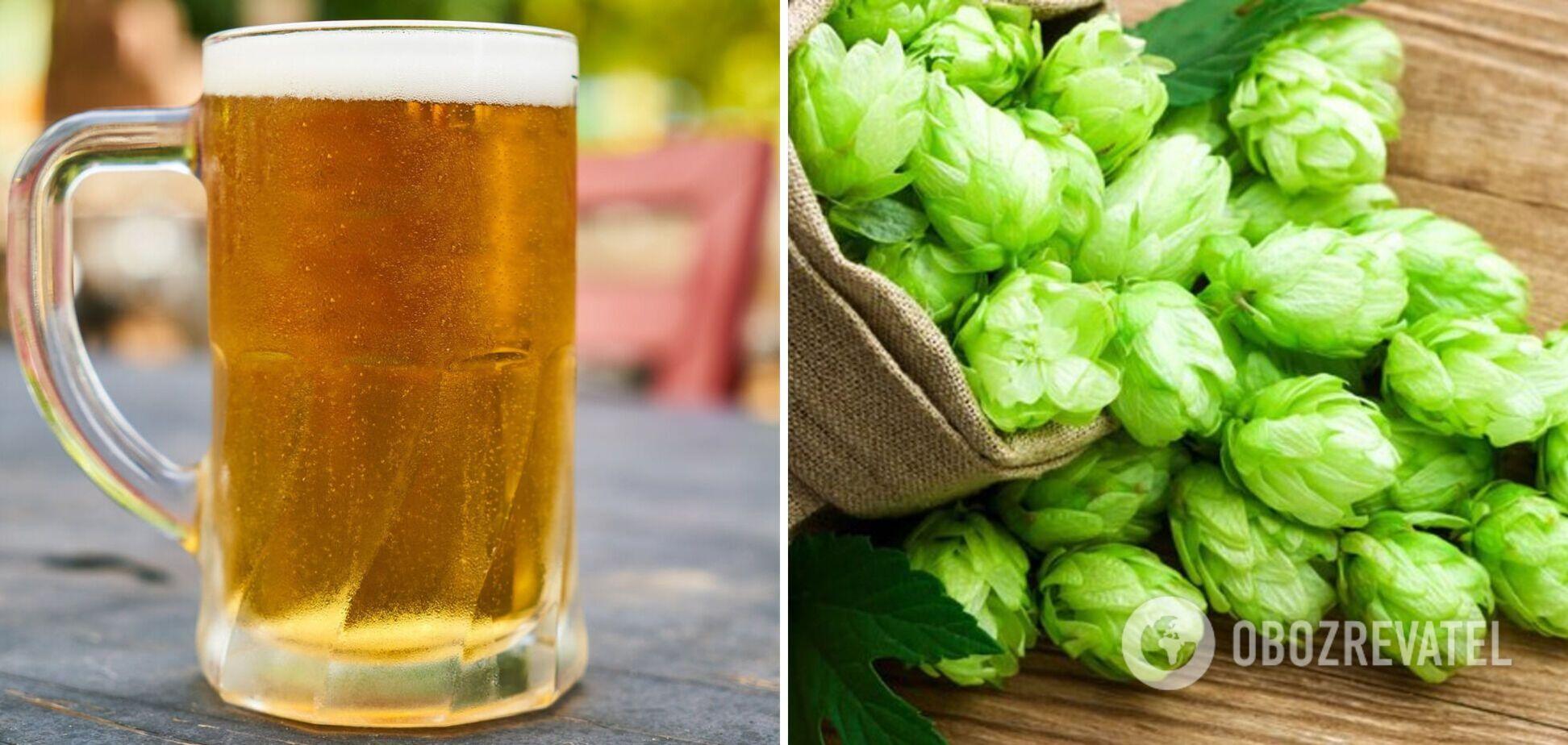 Пиво легко приготовить дома: вкусный напиток с хмелем и медом