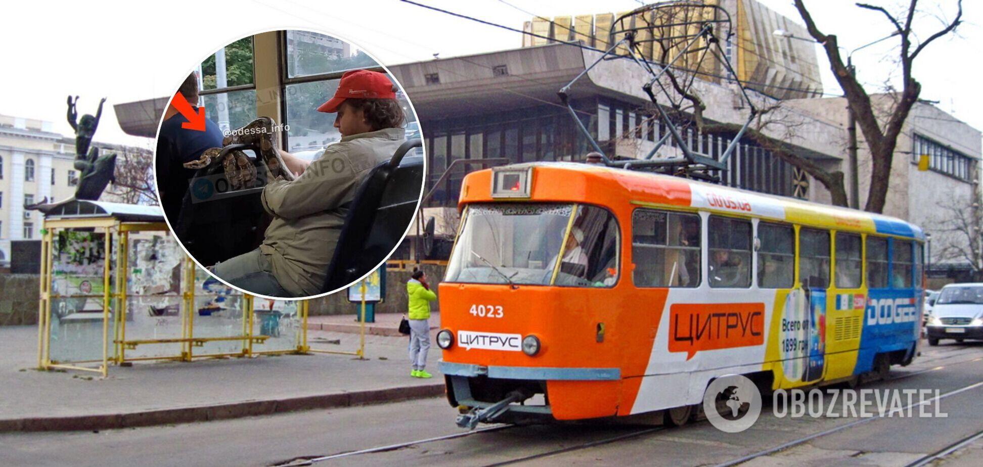 В Одесі пасажир трамвая перевозив пітона
