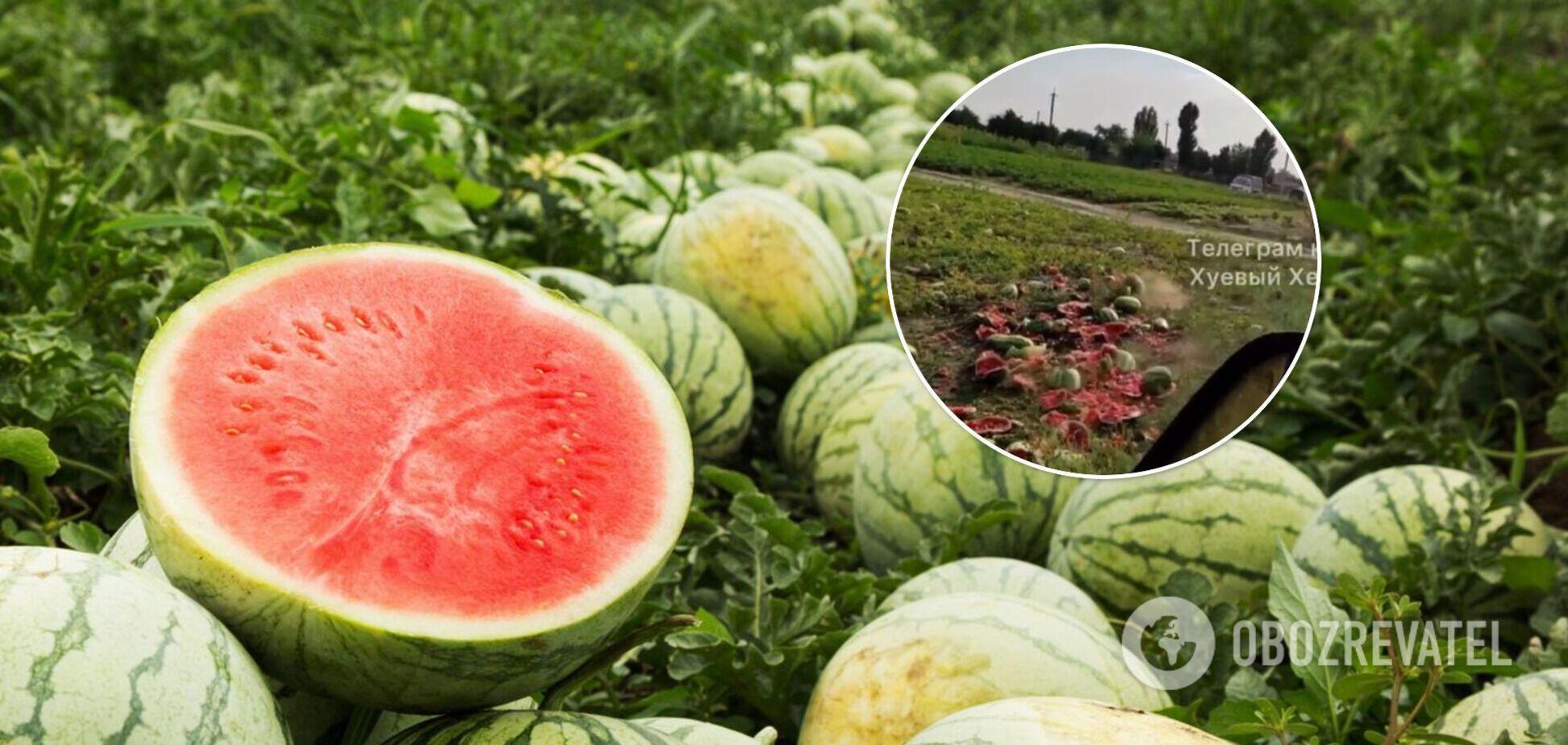 Фермеры на Херсонщине уничтожили урожай арбузов