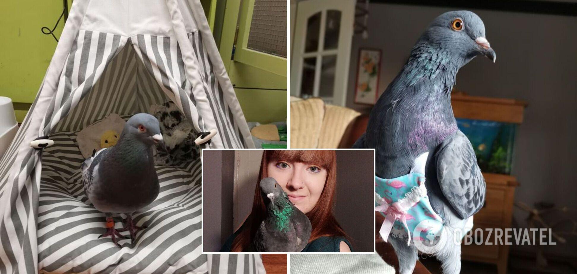 Коляски для выгула и костюмы: англичанка тратит по 4 тысячи фунтов в год на своих голубей. Фото
