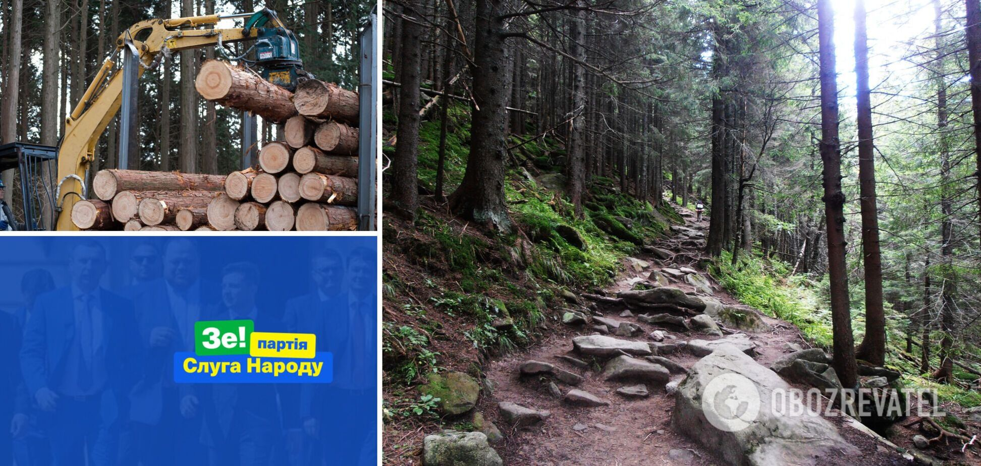 'Слуги народа' хотят отменить мораторий на экспорт леса-кругляка