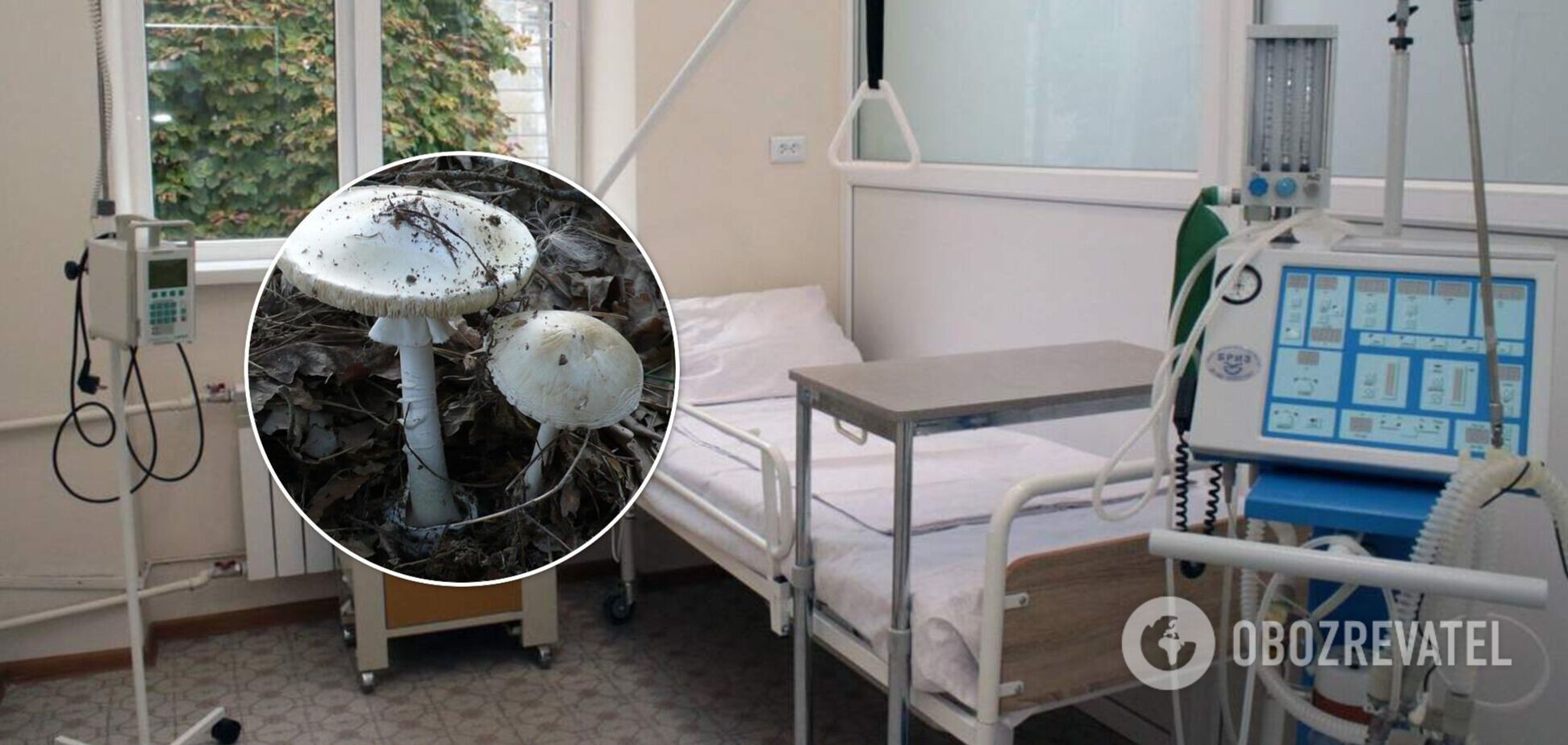 Во Львове трое человек попали в больницу после употребления грибов: врач рассказала об их состояние
