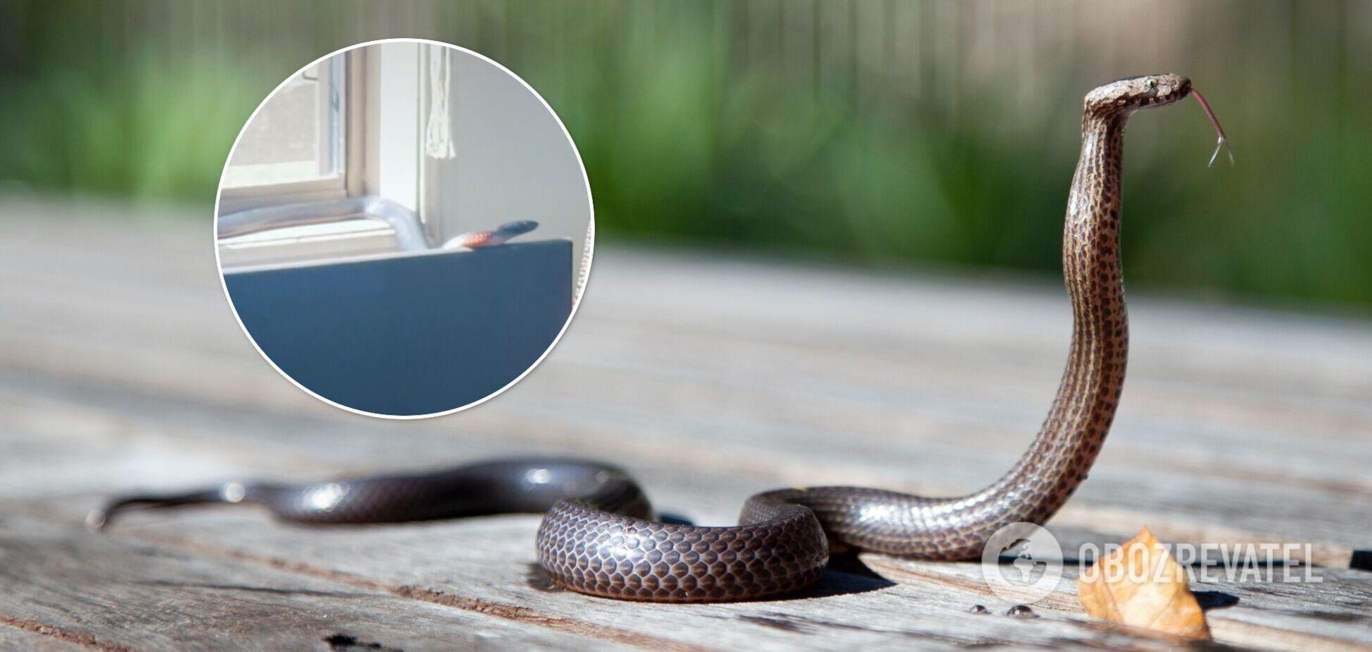 Блогерка знайшла в себе вдома змію
